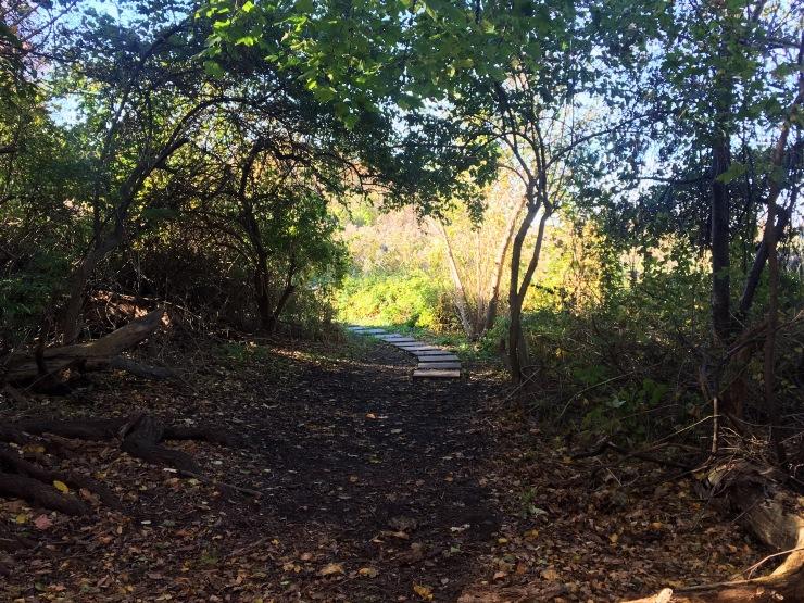 Pat Dolan Trail